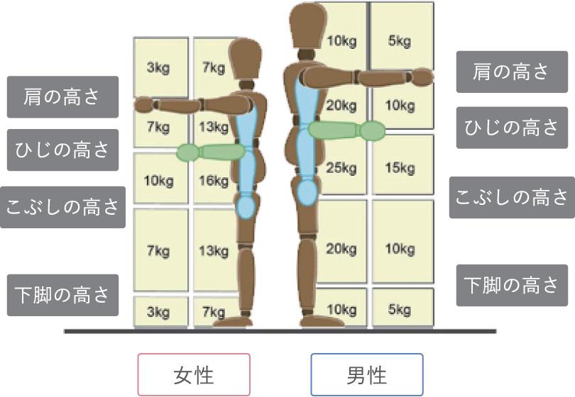 肩の高さ/ひじの高さ/こぶしの高さ/下脚の高さ/肩の高さ/ひじの高さ/こぶしの高さ/女性/男性